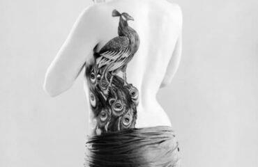 Gorgeous Peacock Tattoos