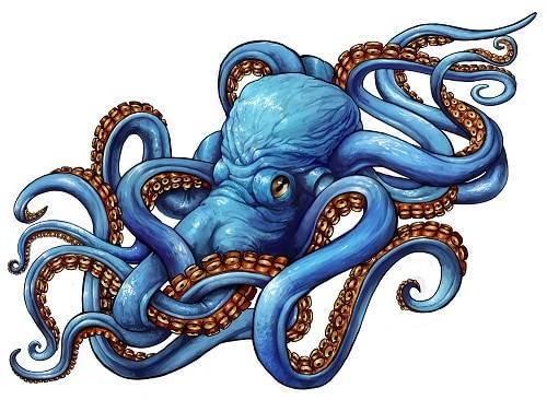 Blue Octopus Tattoo